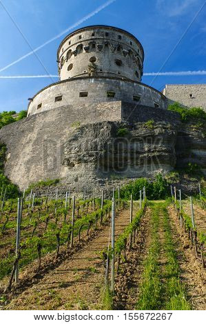 A view of the Marienberg Fortress or Festung in Autumn with vineyard in front Germany