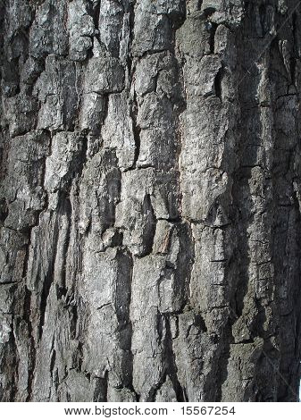 close-up of rough wood