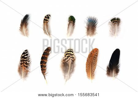 Feather set isolated on white background. Natural and ethnic elements. Bird feathers pattern