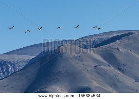 Beautiful view with a flock of gray cranes flying on the background of mountains on a sunny day