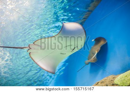 Skate Stingray Aquarium