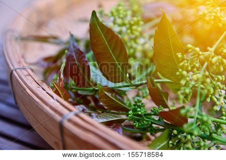 Closeup of Neem leaves and flowers in bamboo basket with sun light effect, vintage style.Herbal concept,healthy  food concept.