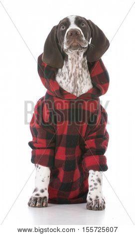 german shorthair pointer puppy wearing red plaid sweater