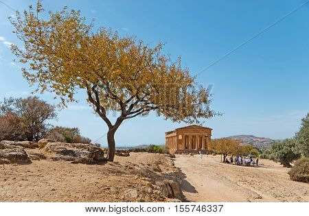 The way to the Concordia Temple located on the dry hills of Agrigento with the scenic almond tree on the foreground Sicily Italy.