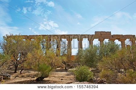 The great stone colonnade of the Juno Lacinia Temple hidden behind the almond and olive trees Agrigento Sicily Italy.