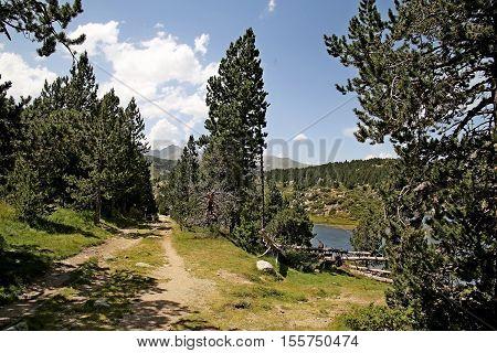 chemin de montagne près du lac avec des sapins