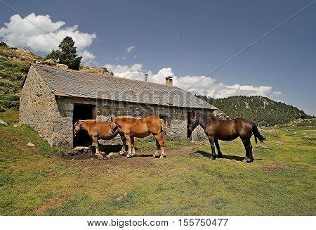 chevaux dans la nature verdoyante en montagne