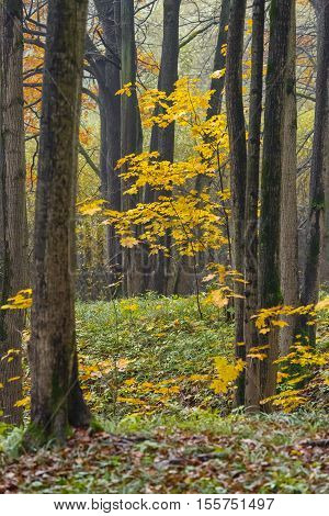 Autunm fall season in the deciduous wood