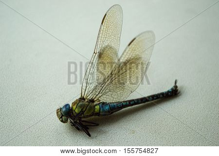 Colorful hairy dragonfly isolated on white background