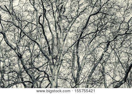Black and white pattern background of tree branches against the sky. Melancholic mood.