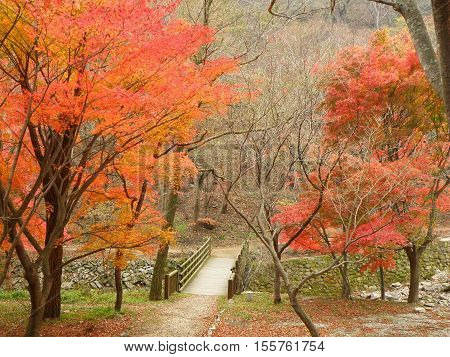 Small Wooden Bridge amongst the Beautiful Colors of Fall Foliage on the Mountainside in South Korea