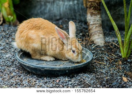 small rabbit in my farm having beakfast