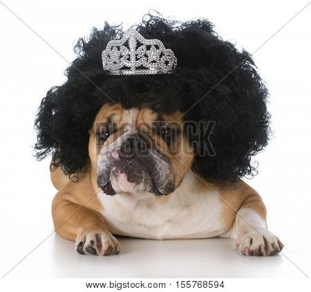 dog wearing a wig and tiara on white background