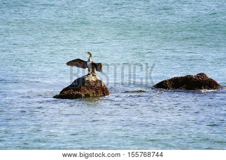 Photo of the Cormorant at Stone Over Blue Water