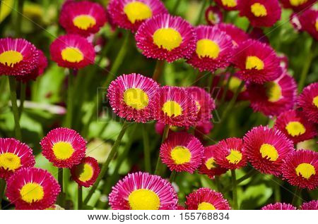 Photo of Spring or Summer Flower Over Green