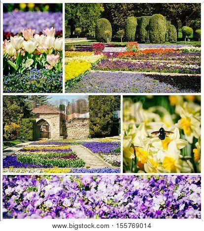 Spring or Summer Flower Blossom in Sunny Day