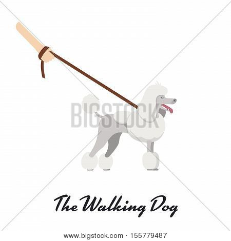 Vector color of the dog white Grand Poodle breed in Continental or English saddle clip standing