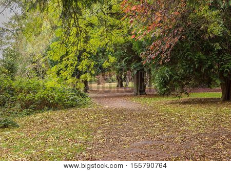 Autumn trees making a canopy over a path at The Glade, Sidcup, Kent, England