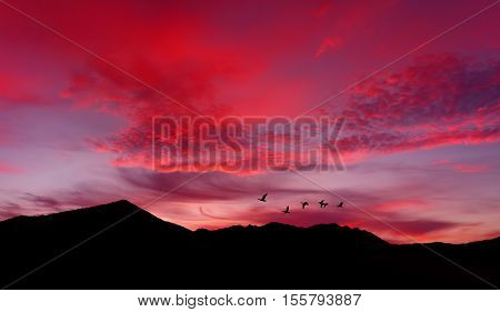 Sunrise or sunset with birds silhouette over red sky