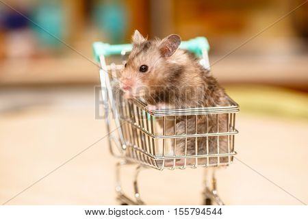 Funny Syrian Hamster Grey In Children's Shopping Carts.
