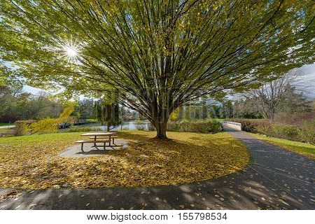 Fall Colors at Commonwealth Lake Park in Beaverton Oregon on a sunny Autumn day