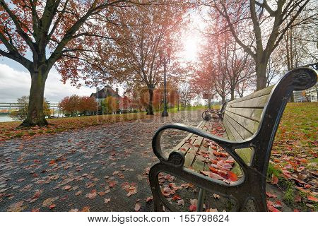 Park Benches in Waterfront Park in downtown Portland Oregon during fall season
