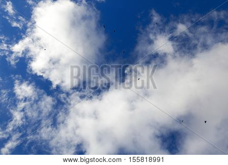 photographed close-up blue sky, in which a flock of birds flying, visible silhouettes, daytime, clouds