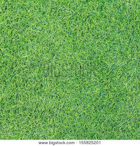 Green grass texture or Green grass background. Top view of natural green grass for golf course and soccer field. Abstract natural green grass.