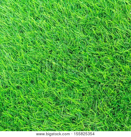 Green grass texture or Green grass background. Top view of artificial green grass for golf course and soccer field. Abstract artificial green grass.