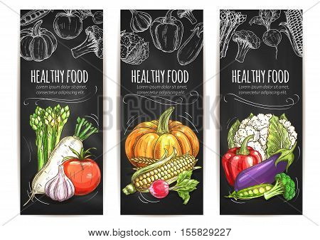 Vegetables posters set. Vegetarian healthy food of vector chalk sketch veggie asparagus, daikon radish, tomato, pumpkin, corn, cauliflower cabbage, garlic, pepper, eggplant, broccoli