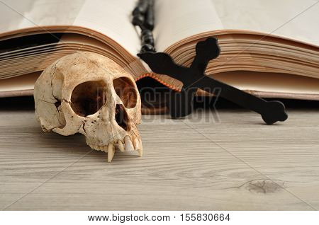 Vervet monkey skull displayed next to an open book and rosary beads