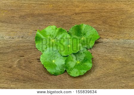 Green Asiatic Pennywort (Centella asiatica ) on wooden background