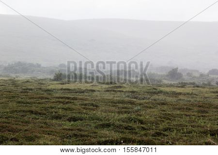 Morning fog in the valley of the meadow haze. Arctic summer the tundra Norway.
