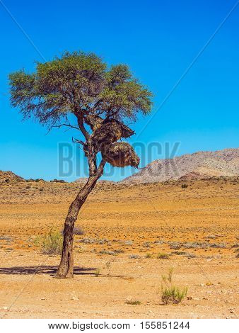 Dirt road in the Namib desert endless. At roadside tree - big nest tropical bird - finch. The concept of exotic and extreme tourism