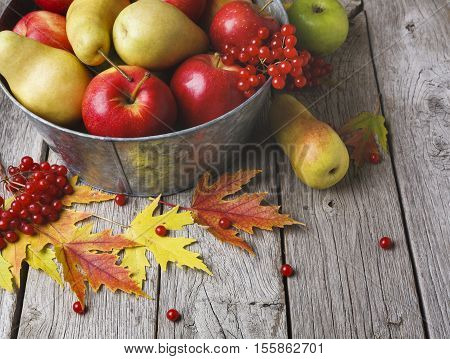 Autumn harvest and thanksgiving card background. Various fruits, rowan, apples, pears in old metal basin and autumn leaves on weathered rustic wood with copy space