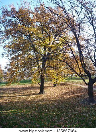 Autumn Season With Fallen Yellow Leaves