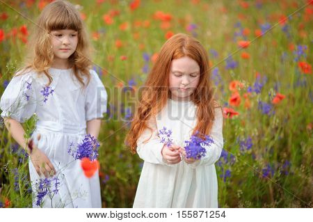 Two little girls in white dress playing in poppy flower field. Child picking blue flowers. Toddler kids having fun in summer meadow. Family summer vacation in the country. Children pick flowers.