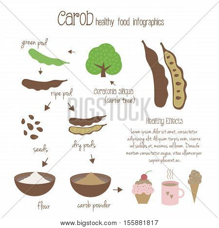 Carob infographics. Production of carob use in cooking. Tree pods seeds and carob powder. Vegetarian decaffeinated food. illustration