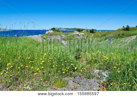 The Shore Of Newfoundland