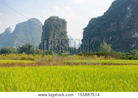 Rice Field In Karst Area Of Guangxi Province, China