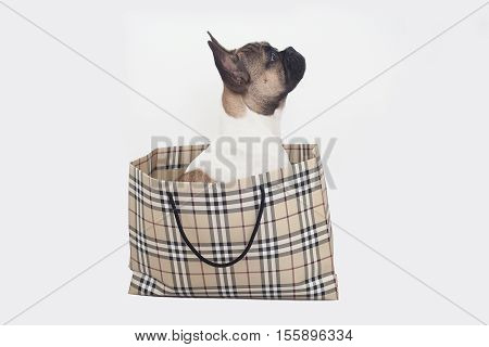 French bull dog puppy in shopping bags