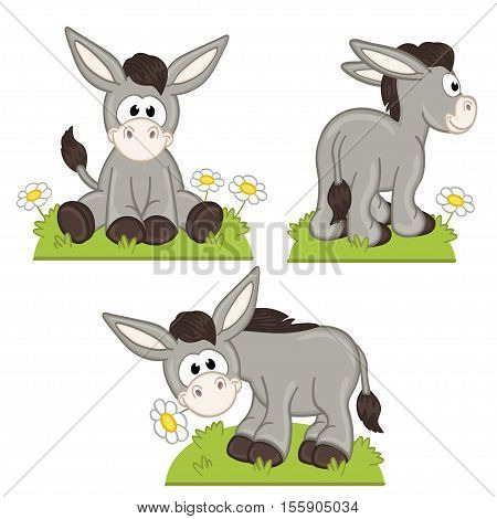 set of isolated donkey in meadow - vector illustration, eps