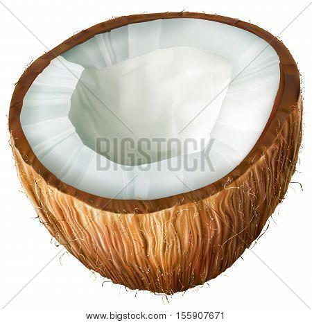 Coconut half on white background. Vector illustrator
