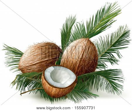 coconuts and half nuts on a palm leaves. Vector illustration