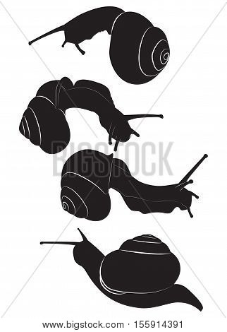 A set of silhouettes edible snail. Vector illustration