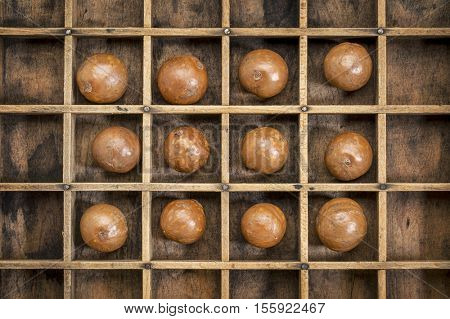 macadamia nuts in shells in rustic wooden typesetter box