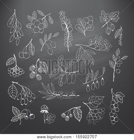 Collection of garden and wild berries. Chalk silhouettes on blackboard. elements for design
