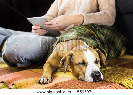 Sleeping dog with reading human. Human with tablet pc on the floor with a sleepy lazy puppy covered in plaid