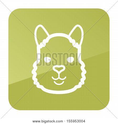 Lama alpaca guanaco icon. Animal head vector symbol eps 10
