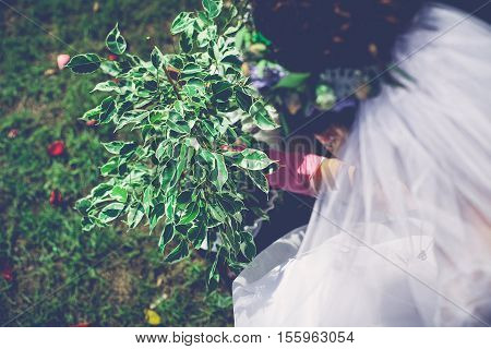 The careful person plants a green tree on the nature